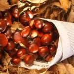 Otoño y Puente de Noviembre: La Fiesta de las castañas