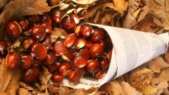Castañas y hojas de otoño - LugaresyHoteles