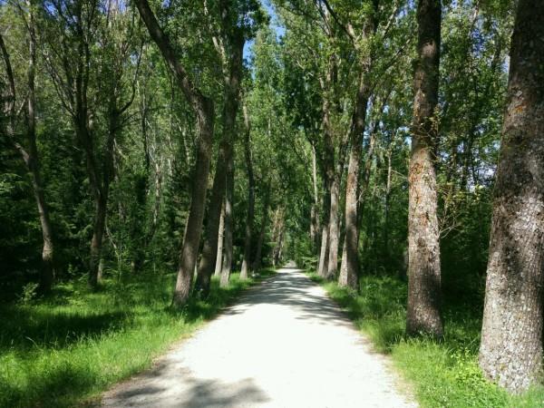 Bosque Ruta Rascafría