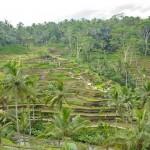 Qué visitar en Bali en 15 días Parte II (Ubud)