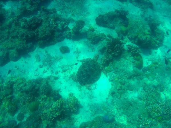 Islas Gili snorkel