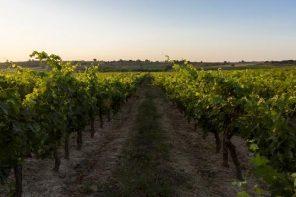 ¿Donde alojarse en la Ribera del Duero para hacer enoturismo?